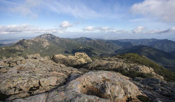 Foto Giovanni Paulis - CEAS A.Monni WWF Monte Arcosu